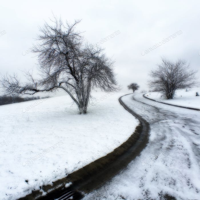 Bare trees and road in snow  NOMINATED