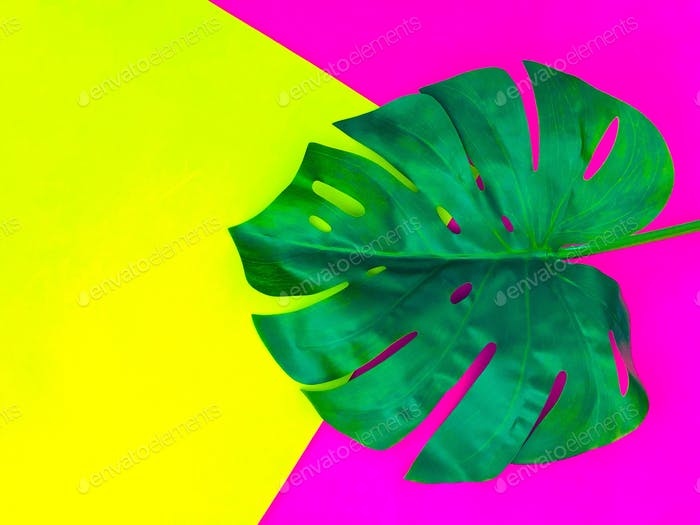 Green Monstera leaf on bright and bold colorful background with copy space