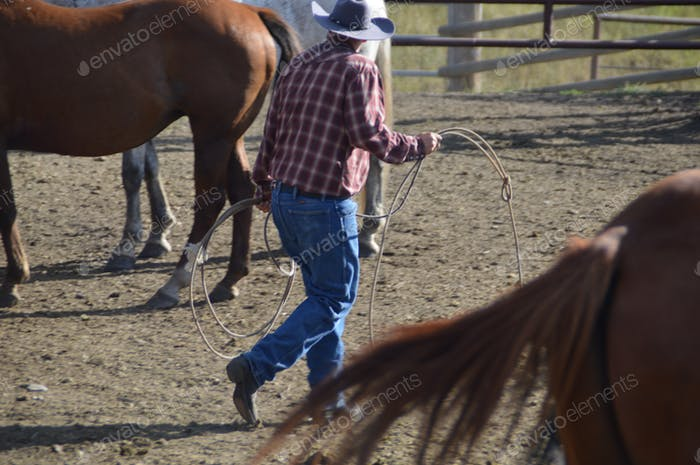 Cowboy with lasso among the horses