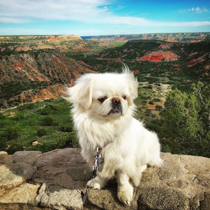 Peek at the canyon