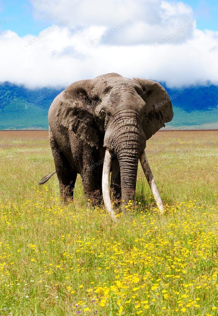 Africa honeymoon at Ngorongoro Crater
