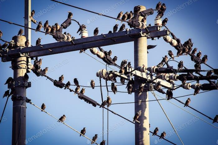 Vögel von Elektrizitätsdraht