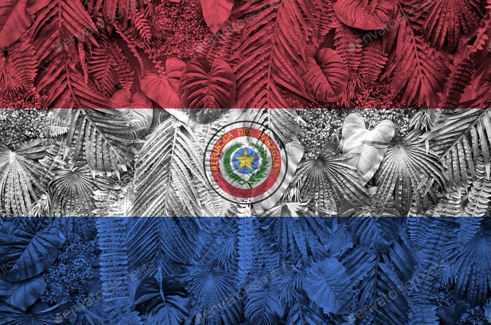 Paraguay flag depicted on many leafs of monstera palm trees. Trendy fashionable background
