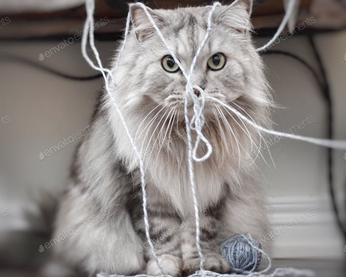 Caught in the act. Naughty mischievous cat playing with yarn