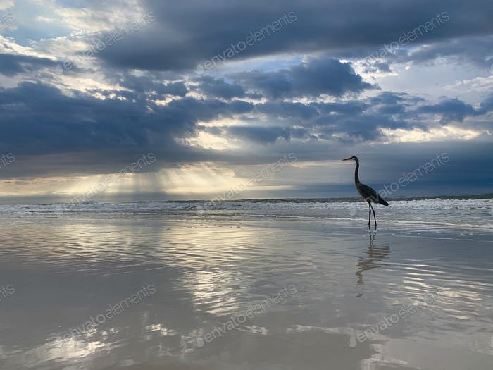 Beautiful beach sunrise background. sun bursting through the clouds at dawn with heron silhouette