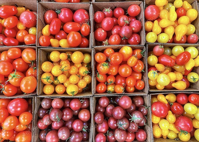 Assortment of colorful organic cherry tomatoes for sale at the farmers market!