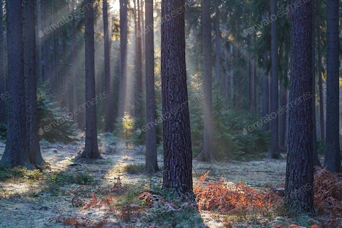 ...................... Let it be light ....................... ________ Czech Republic _________