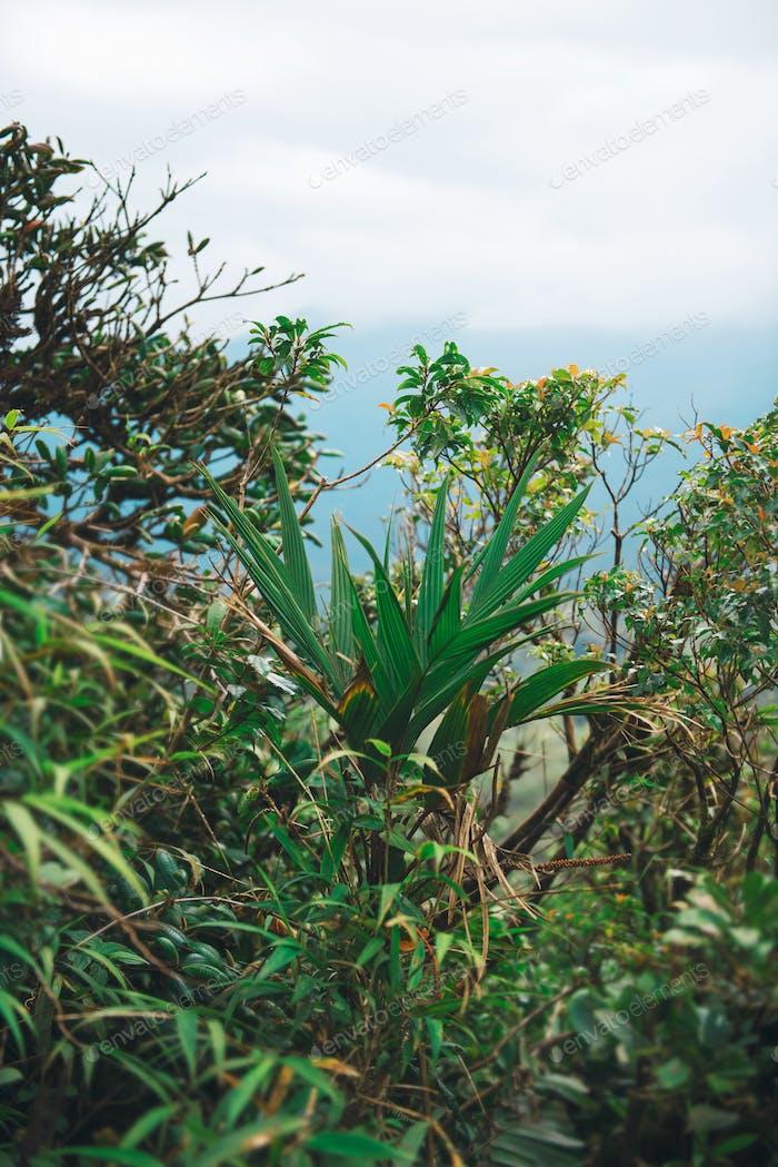 Flora im Dschungel
