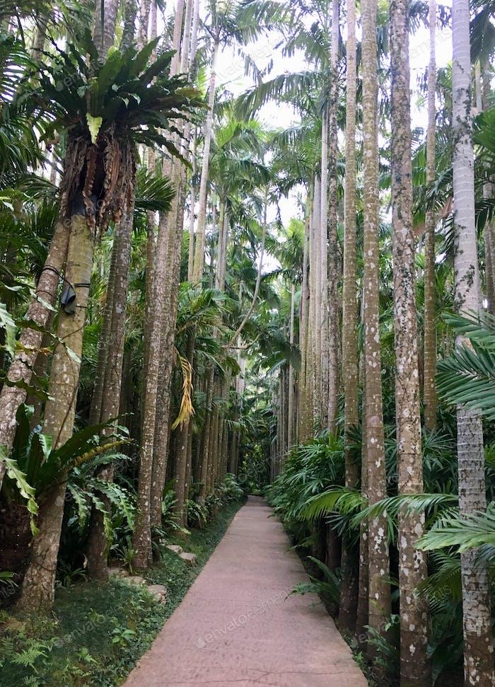 Lovers lane of Alexandra palm trees in southeast botanical gardens in Okinawa