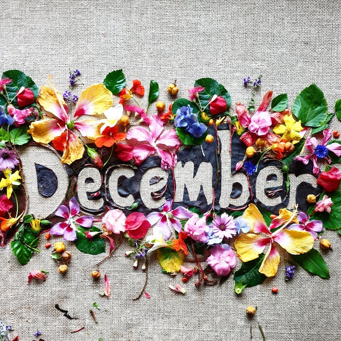 December,creative words made with flowers