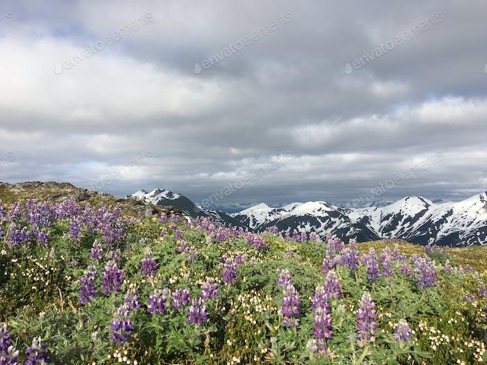 Bewölkter Tag am Gipfel des Mt Juneau