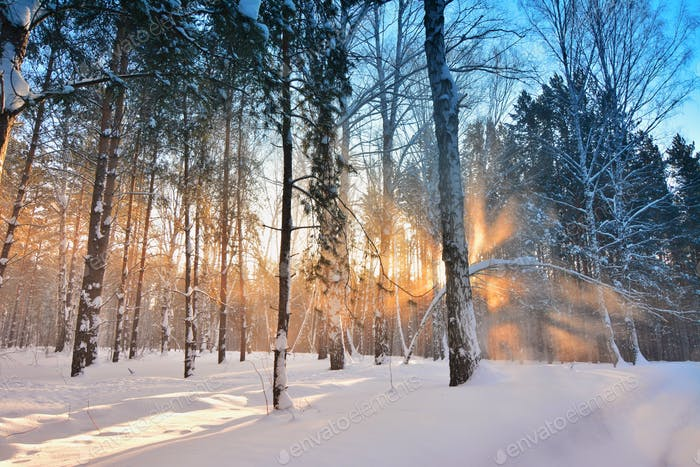 Огненный лес