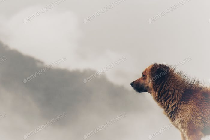 Morning companion!!! Mountain dog basking in the morning sun