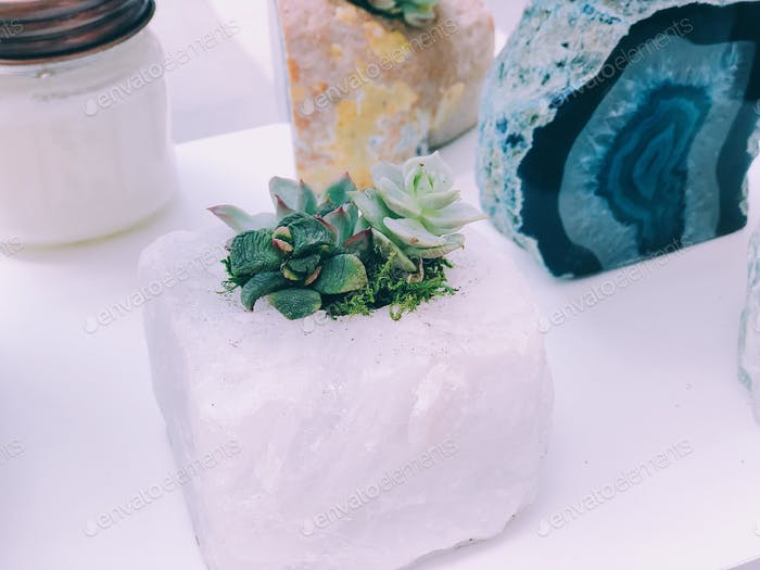 Succulent plants and amethyst crystals , dying plant