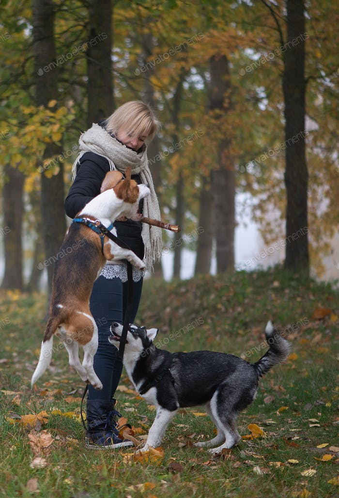 Woman with siberian husky puppy and beagle dog for a walk in the city autumn park