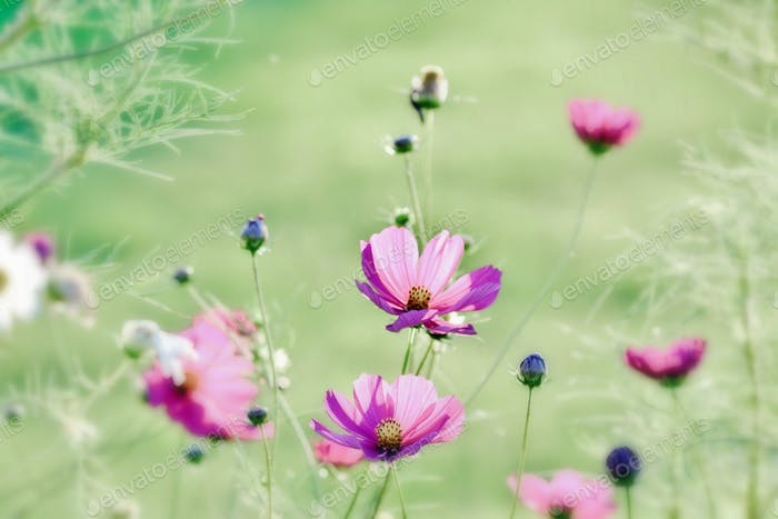 Simple captivating background! #flowersphotography #flowersphoto #flowerstalking #flowerday