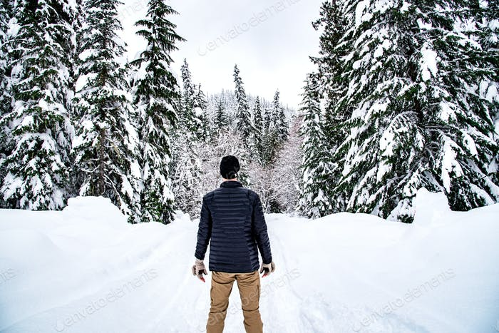 Rear view of man staring into the winter wilderness evergreen forest covered in fresh powder snow.