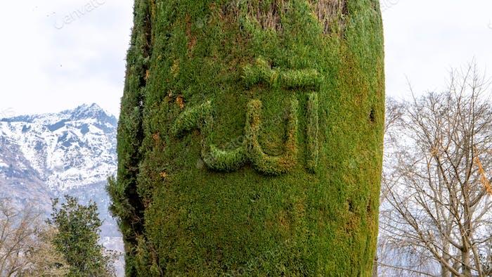 Ferns on stone