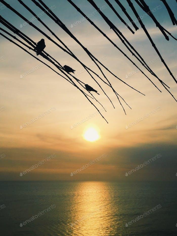 birdy sunset 🐦