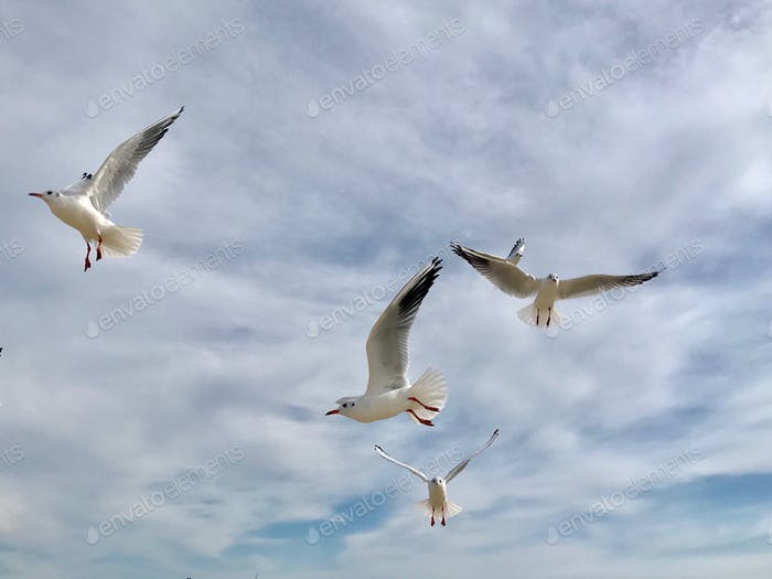 Seagulls. iPhoneography.
