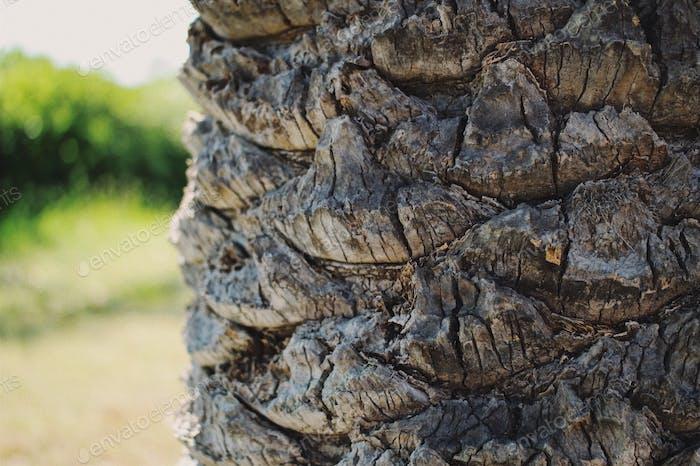 Natural armor...Palmtree bark...