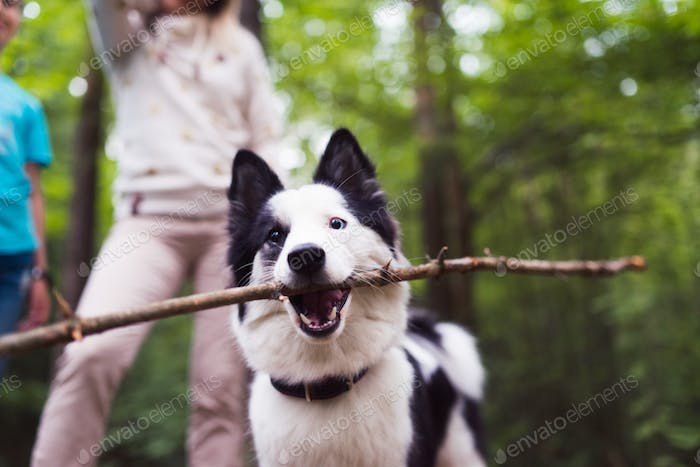 dog with stick in forest