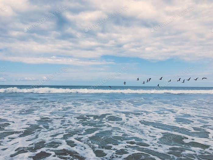 Rozando mar