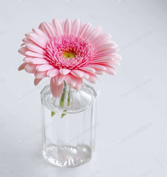 Pink daisy in bottle