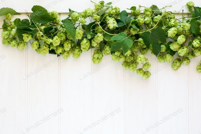 Fresh green hops on a white wooden background