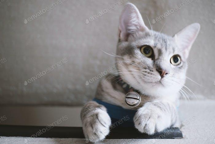 Niedliches Tabby Kätzchen