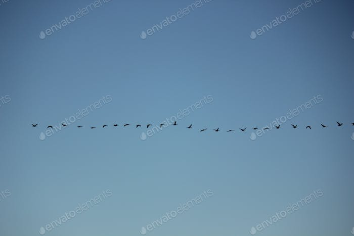 Straight line or follow the leader