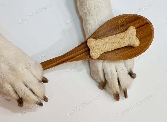 Dogs paws holding a wooden spoon with a dog treat on the spoon. ⭐️Nominated ⭐️