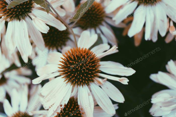 Verloren in Floral