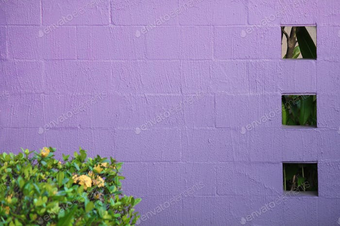 Purple wall with three square cut outs