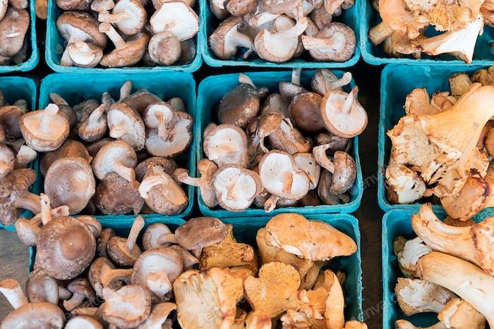 Fungi at a farmers market overhead