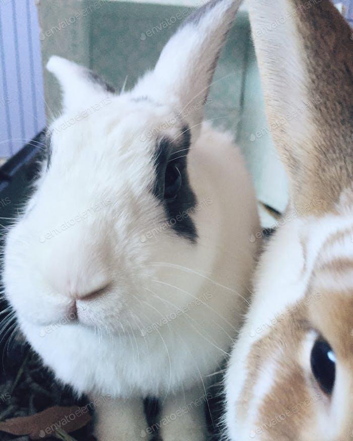 Easter bunnies !