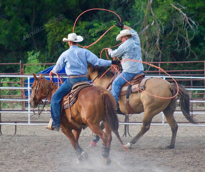 Rodeo riders in a corral preparing to throw their lassos