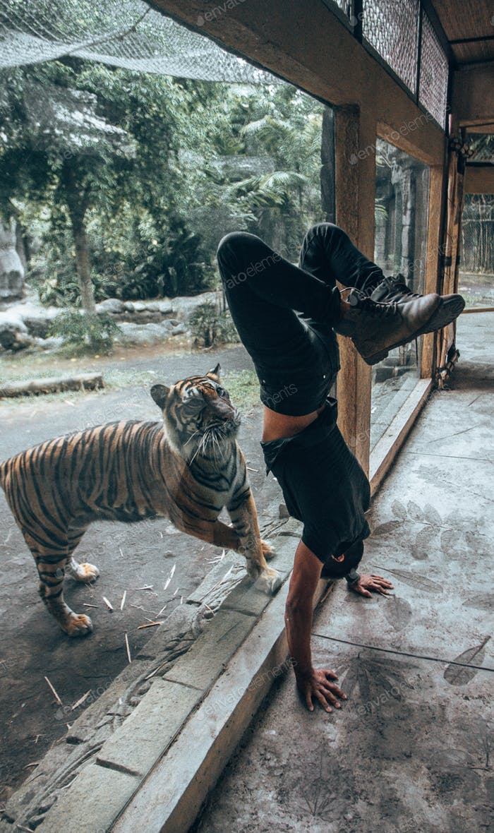 Man doing handstand for tiger