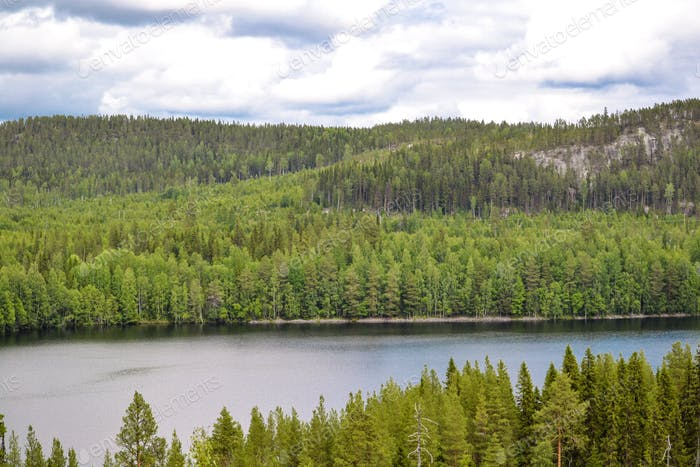Forest, trees, lake, mountain, view