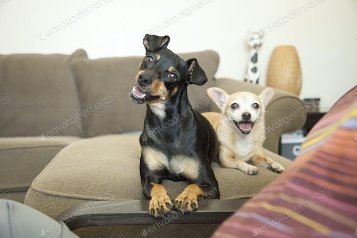 ein paar glückliche Hunde
