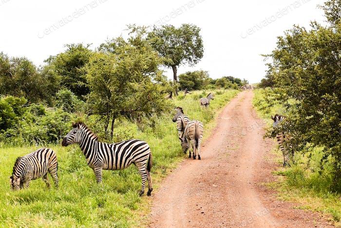 Safari auf meiner Bucket-Liste