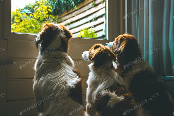 Three loyal dogs waiting at the door until the owner comes back