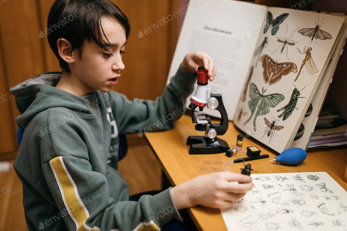 brunet teen boy is engaged in scientific experiments, examines insects and looks through  microscope