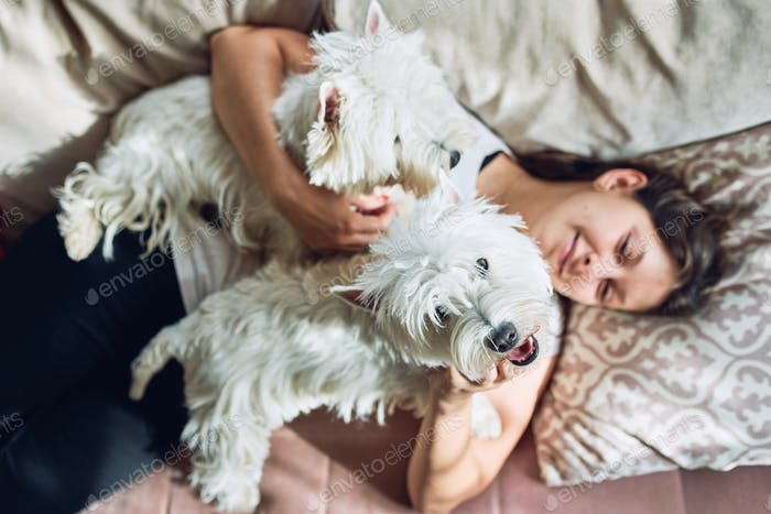 A pair of lovely west  highland white terrier are lying on the sofa and hugging their owner.