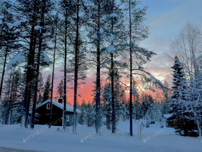 Lapland magical trees and cabin in snow at sunset