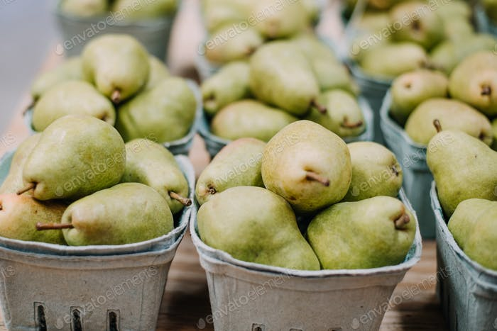 Pears in a basket at an orchard