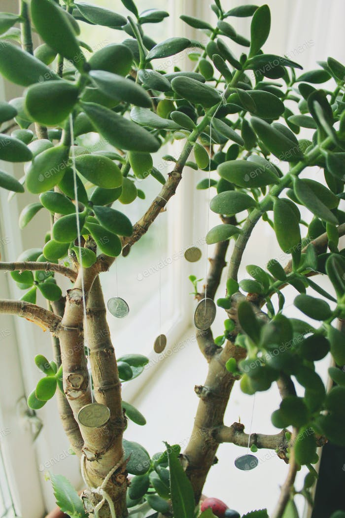 Green money tree with coins