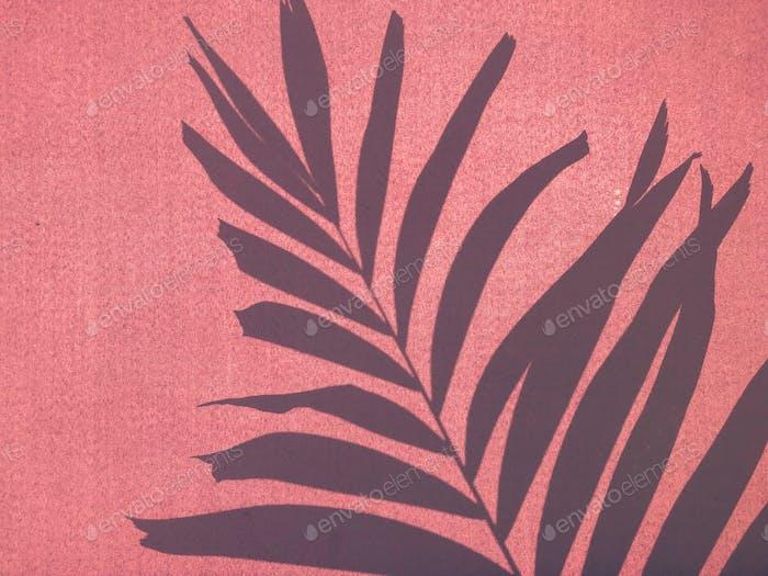 Sellout of a palm frond through an umbrella