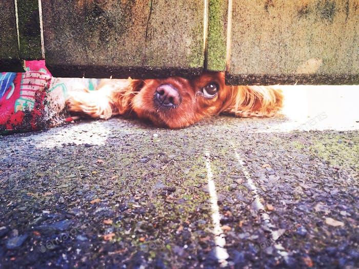 Lindo perro mirando debajo de la puerta