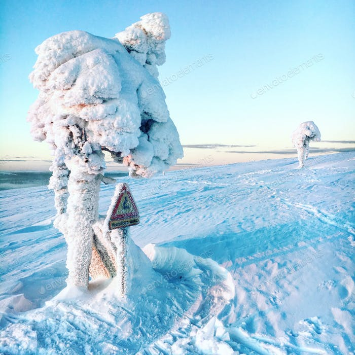 Frosty Trees in Lapland. Finland